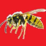Wespen- bzw. Hornissenentfernen